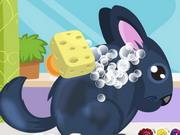 Play Chinchilla Pet Care