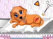 犬のヘルスケア