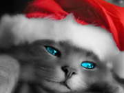Play Santa Cat Puzzle