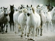 Play White Horse Jigsaw